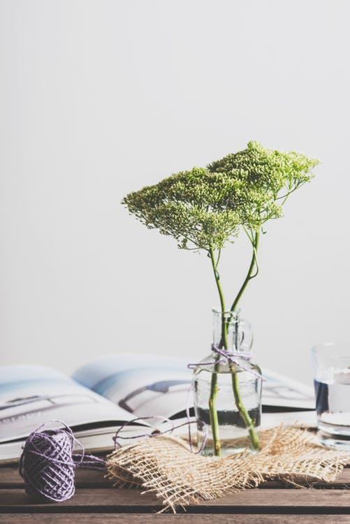 Hvor mange planter har du derhjemme?